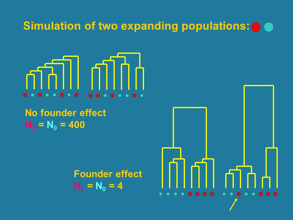 Simulation of two expanding populations: