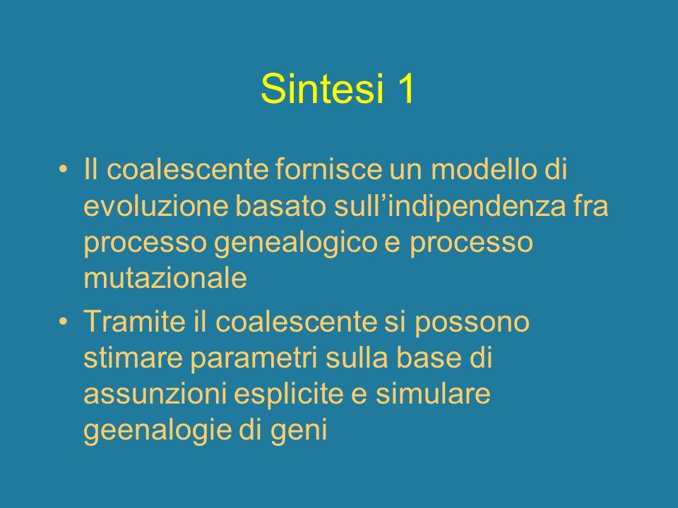 Sintesi 1 Il coalescente fornisce un modello di evoluzione basato sull'indipendenza fra processo genealogico e processo mutazionale.