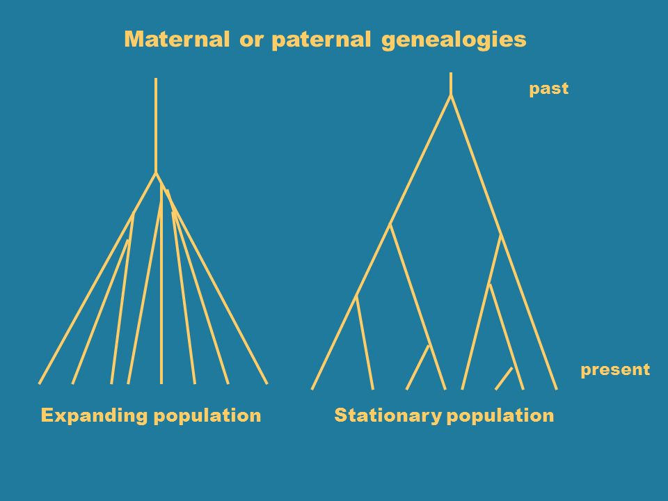 Maternal or paternal genealogies