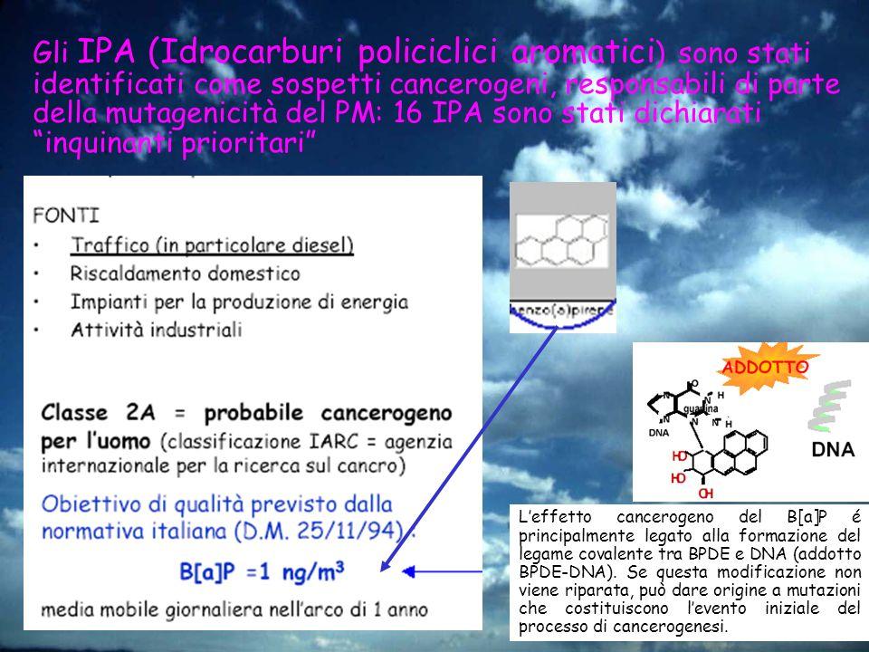 Gli IPA (Idrocarburi policiclici aromatici) sono stati identificati come sospetti cancerogeni, responsabili di parte della mutagenicità del PM: 16 IPA sono stati dichiarati inquinanti prioritari