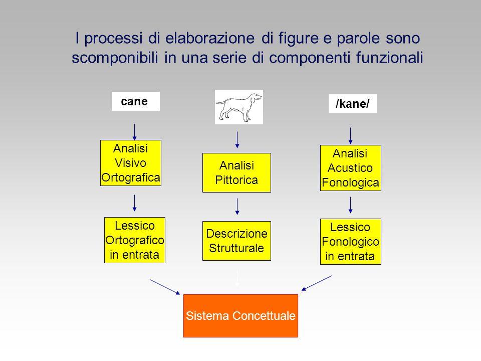 I processi di elaborazione di figure e parole sono scomponibili in una serie di componenti funzionali