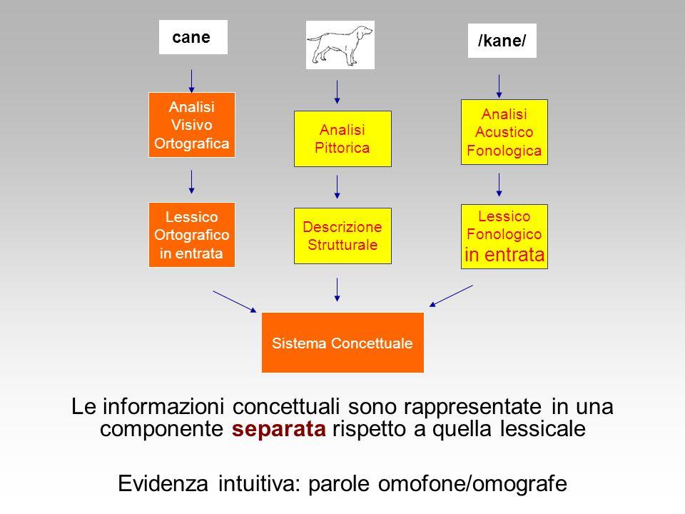 Evidenza intuitiva: parole omofone/omografe