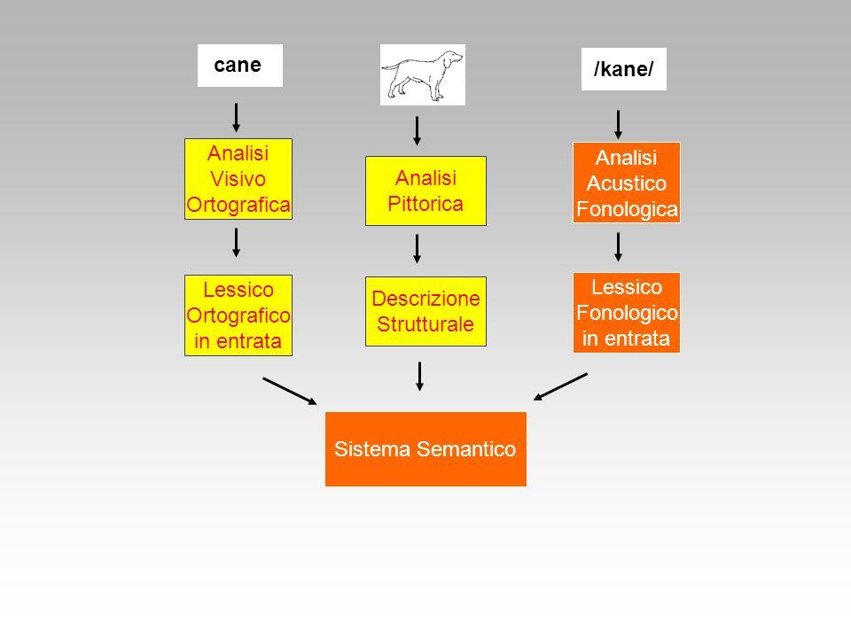 cane /kane/ Analisi Analisi Visivo Acustico Analisi Ortografica