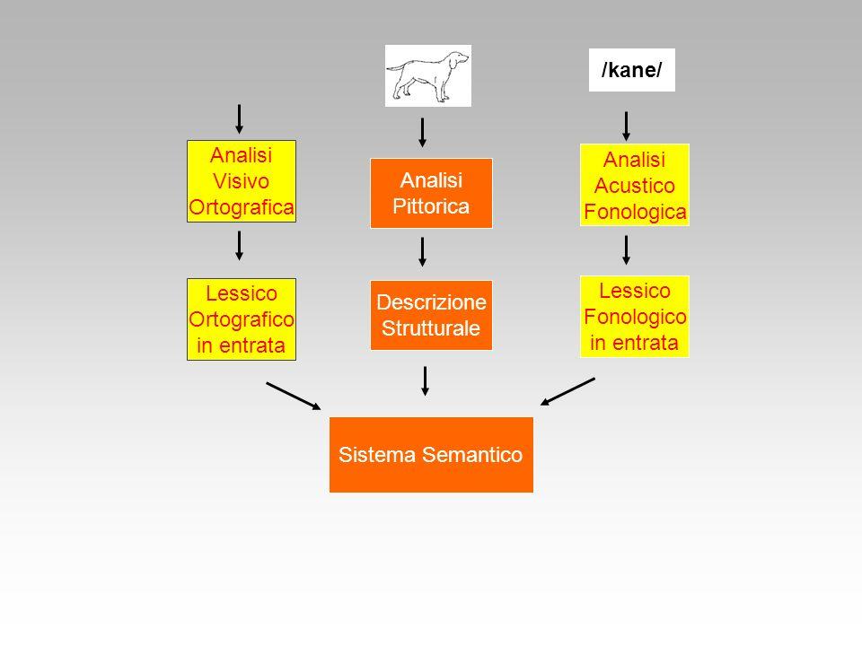 /kane/ Analisi Analisi Visivo Acustico Analisi Ortografica Fonologica