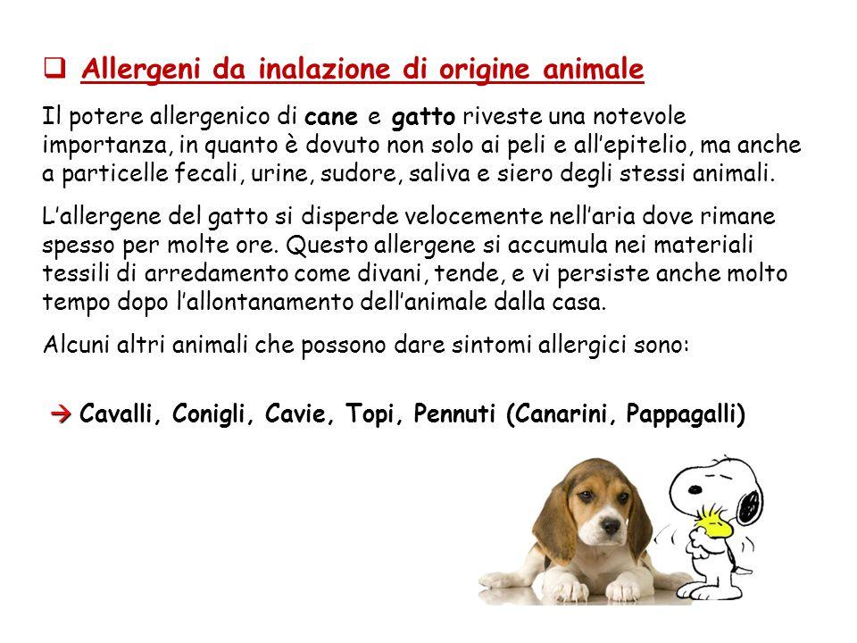 Allergeni da inalazione di origine animale