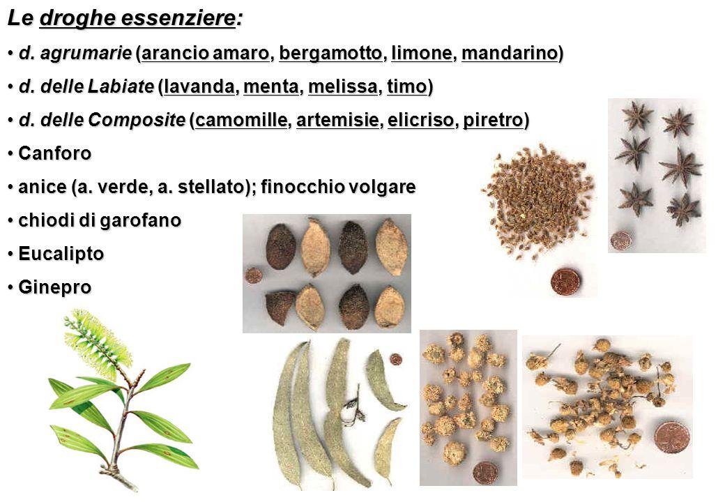 Le droghe essenziere: d. agrumarie (arancio amaro, bergamotto, limone, mandarino) d. delle Labiate (lavanda, menta, melissa, timo)