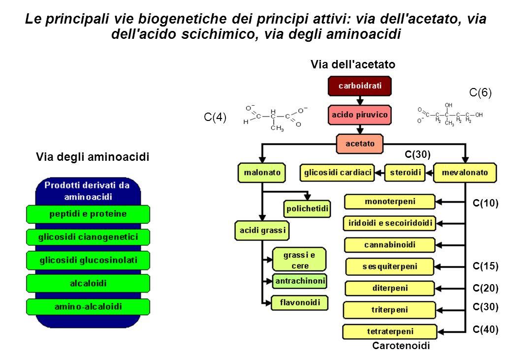 Le principali vie biogenetiche dei principi attivi: via dell acetato, via dell acido scichimico, via degli aminoacidi