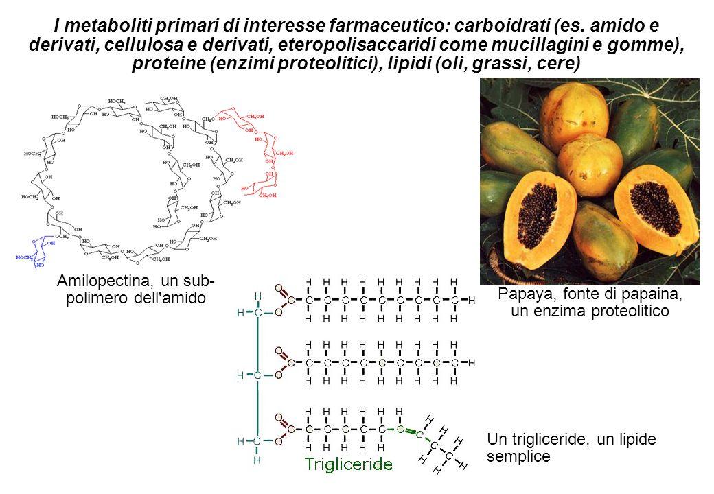 I metaboliti primari di interesse farmaceutico: carboidrati (es