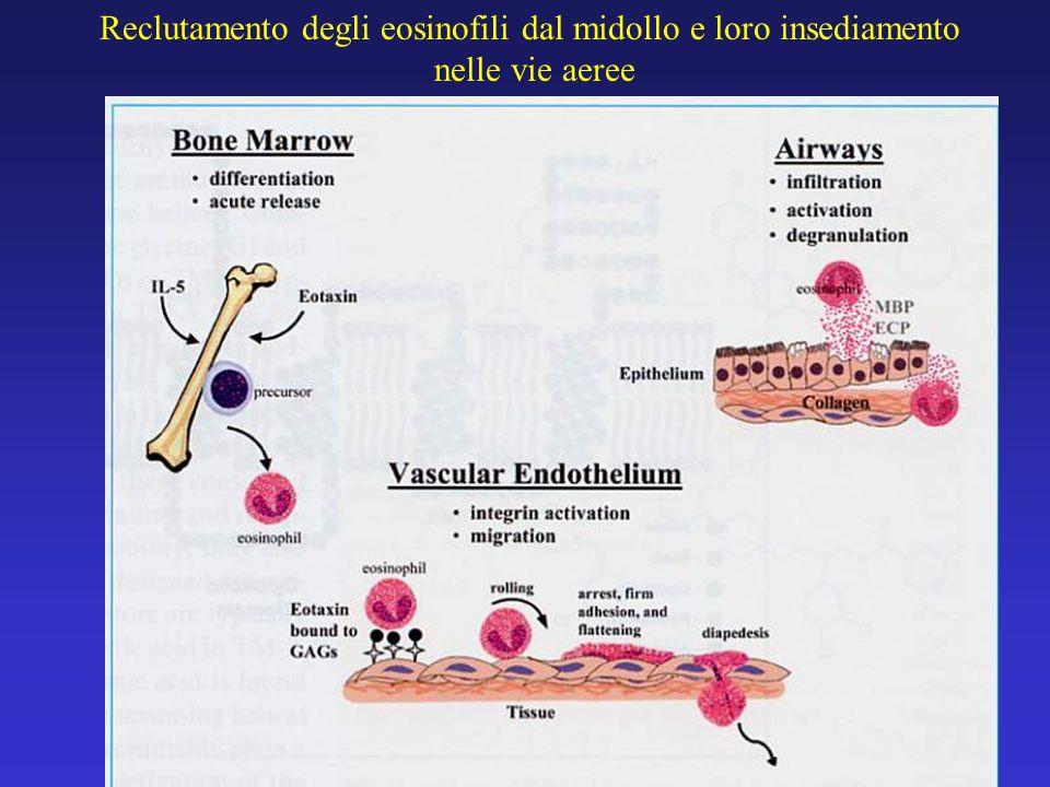Reclutamento degli eosinofili dal midollo e loro insediamento