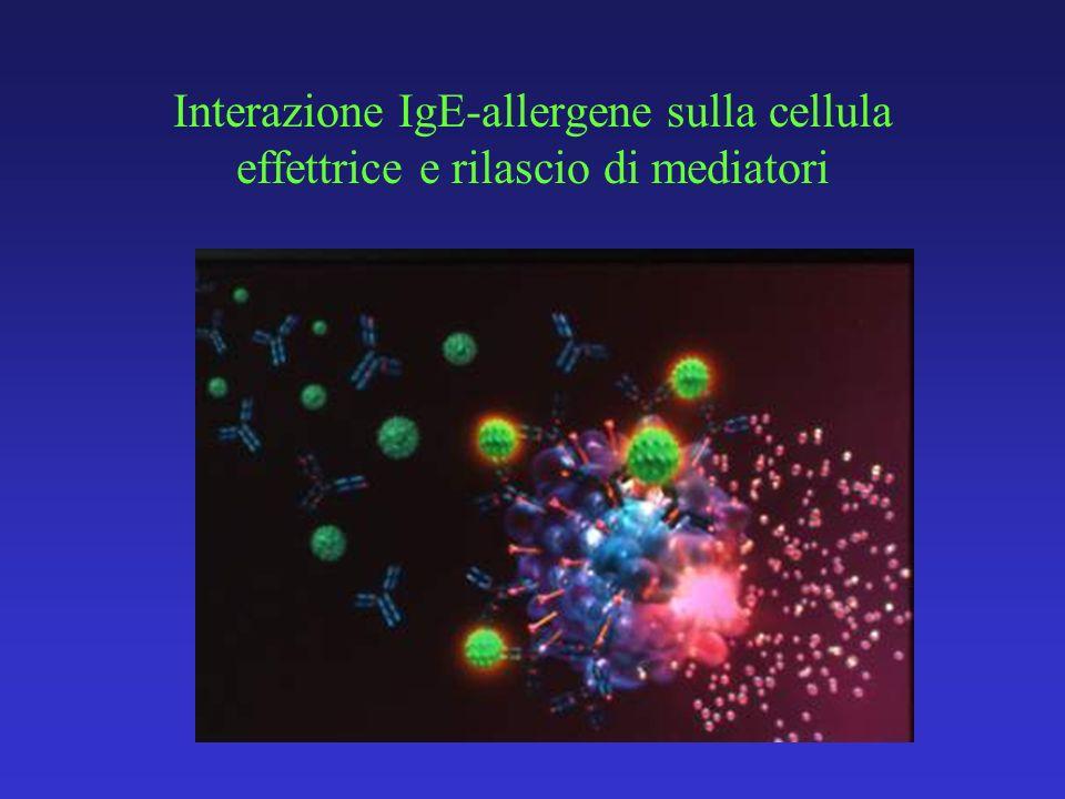 Interazione IgE-allergene sulla cellula effettrice e rilascio di mediatori
