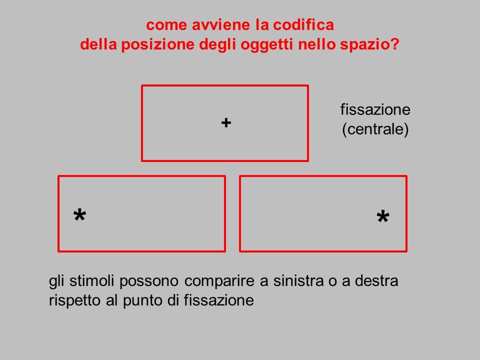 come avviene la codifica della posizione degli oggetti nello spazio