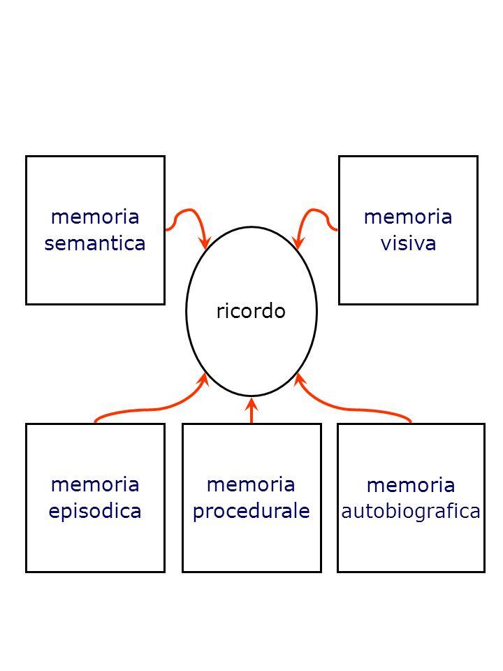 memoria semantica memoria visiva ricordo memoria episodica memoria