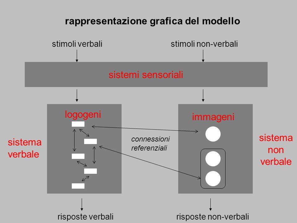 rappresentazione grafica del modello