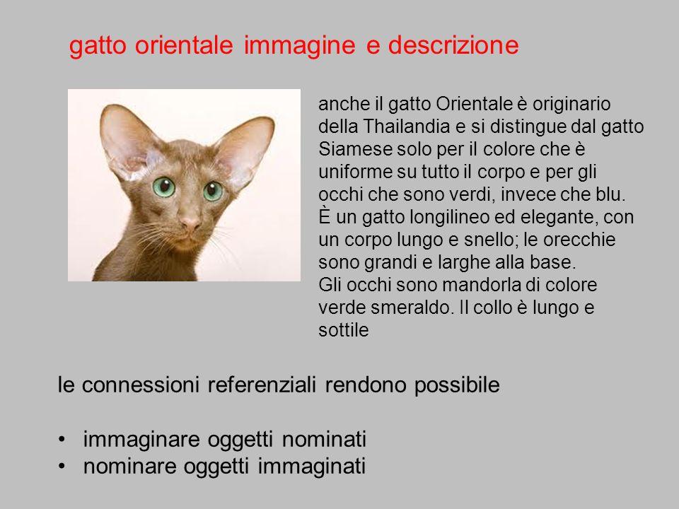 gatto orientale immagine e descrizione