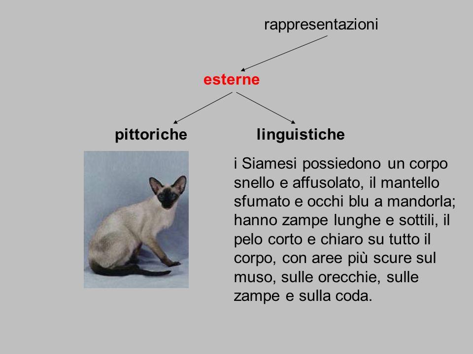 rappresentazioni esterne. pittoriche. linguistiche.