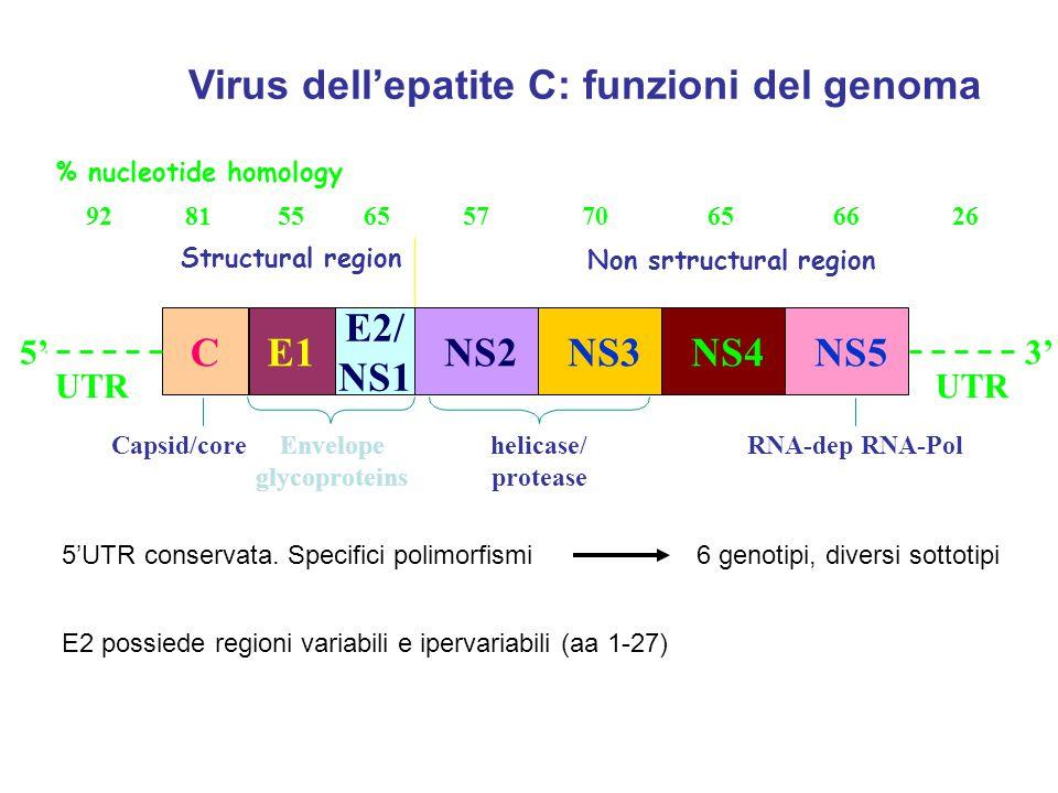 Virus dell'epatite C: funzioni del genoma