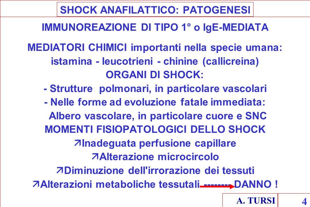 SHOCK ANAFILATTICO: PATOGENESI