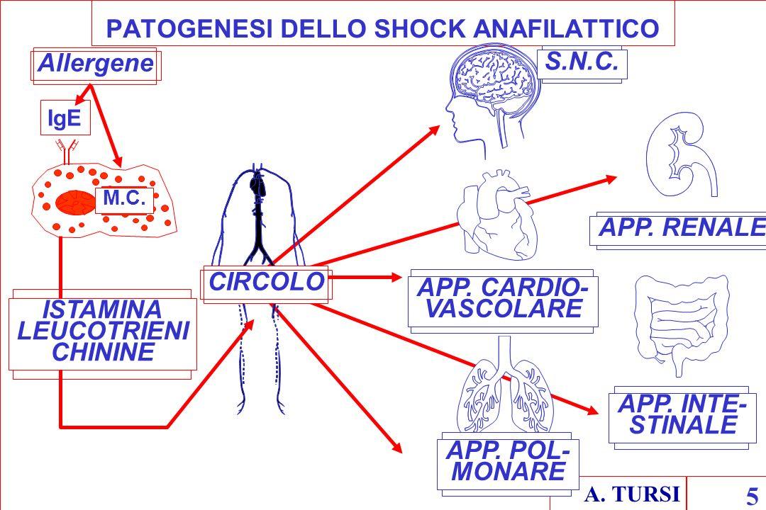 PATOGENESI DELLO SHOCK ANAFILATTICO