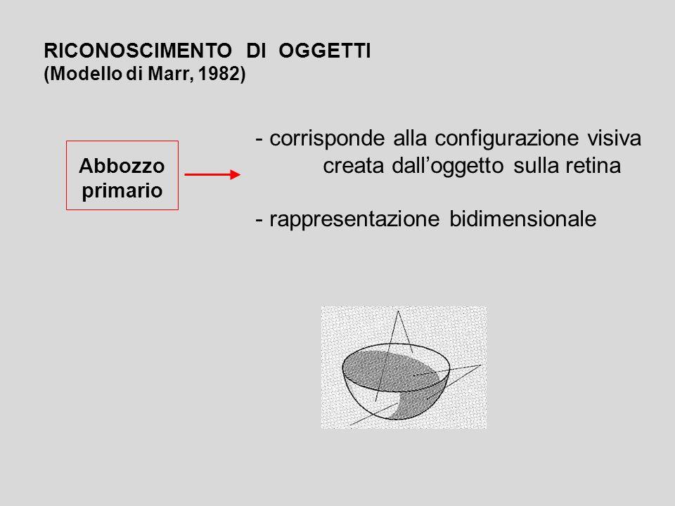 rappresentazione bidimensionale