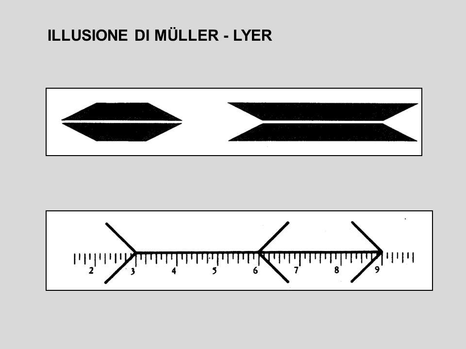 ILLUSIONE DI MÜLLER - LYER