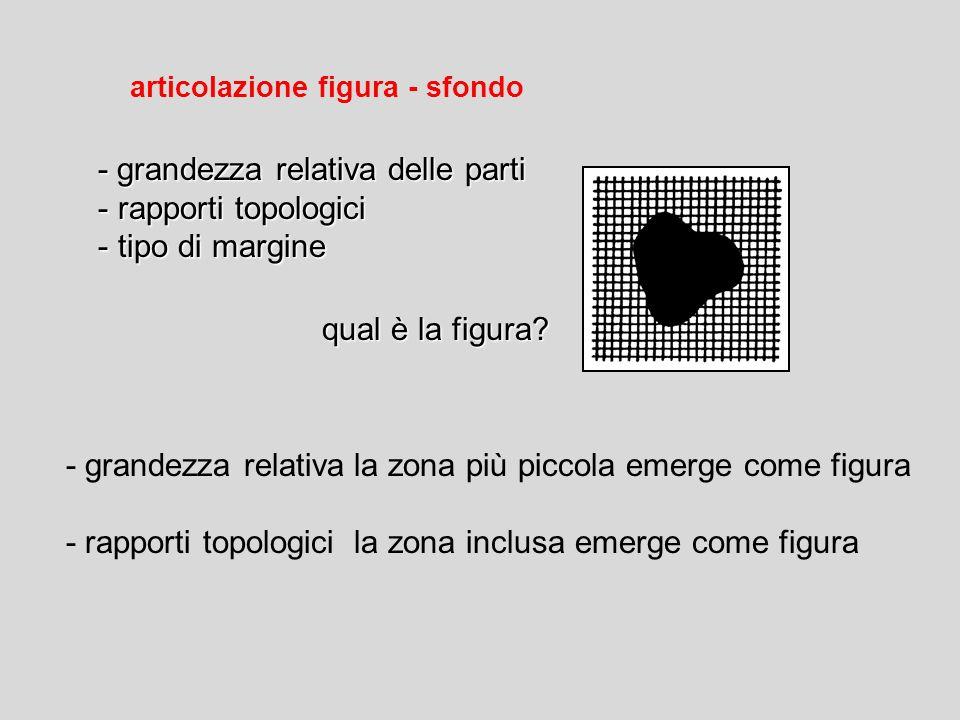 - grandezza relativa delle parti rapporti topologici tipo di margine