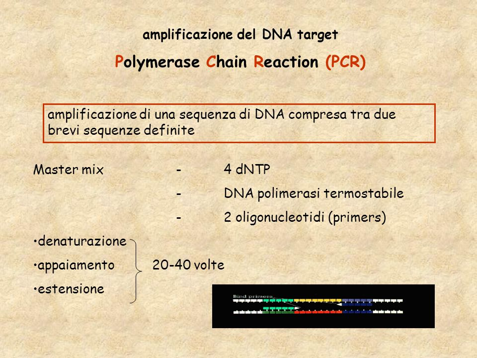 amplificazione del DNA target Polymerase Chain Reaction (PCR)