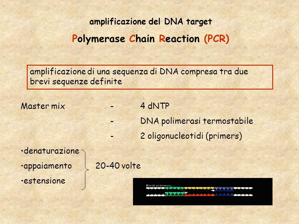amplificazione del DNA target Polymerase Chain Reaction (PCR)