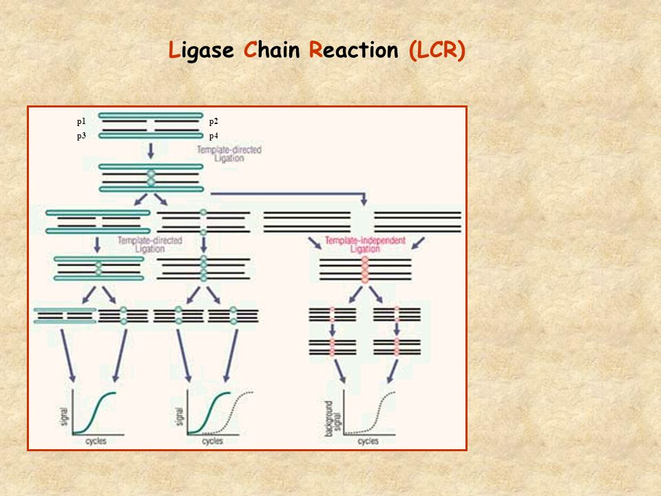 Ligase Chain Reaction (LCR)