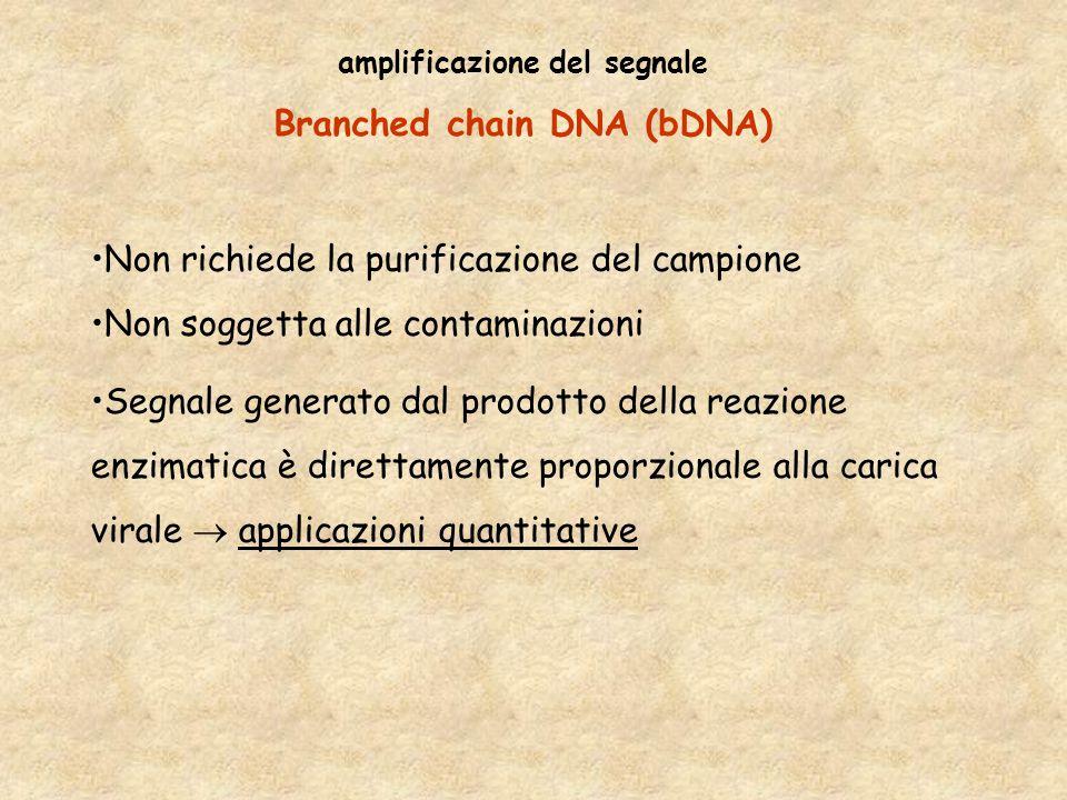 amplificazione del segnale Branched chain DNA (bDNA)