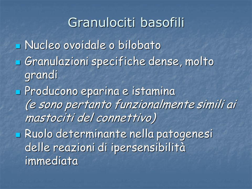 Granulociti basofili Nucleo ovoidale o bilobato