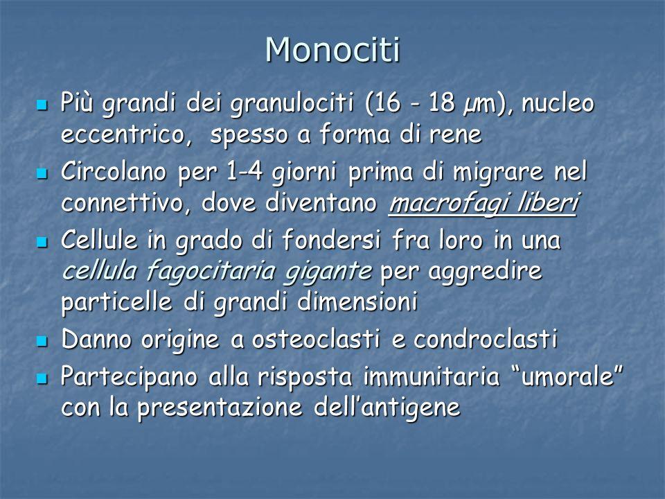 Monociti Più grandi dei granulociti (16 - 18 µm), nucleo eccentrico, spesso a forma di rene.
