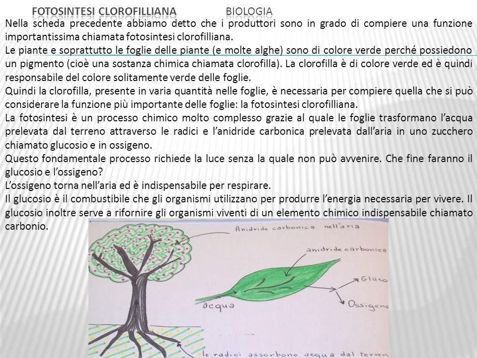 Fotosintesi clorofilliana Biologia