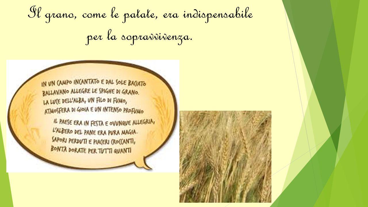 Il grano, come le patate, era indispensabile per la sopravvivenza.
