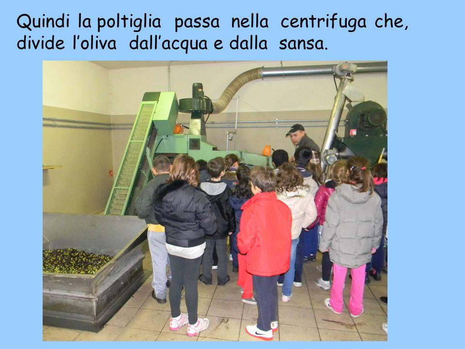 Quindi la poltiglia passa nella centrifuga che, divide l'oliva dall'acqua e dalla sansa.