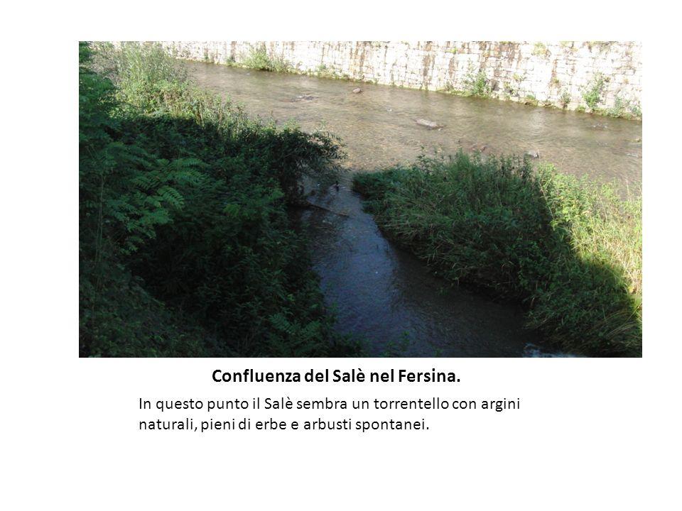 Confluenza del Salè nel Fersina.