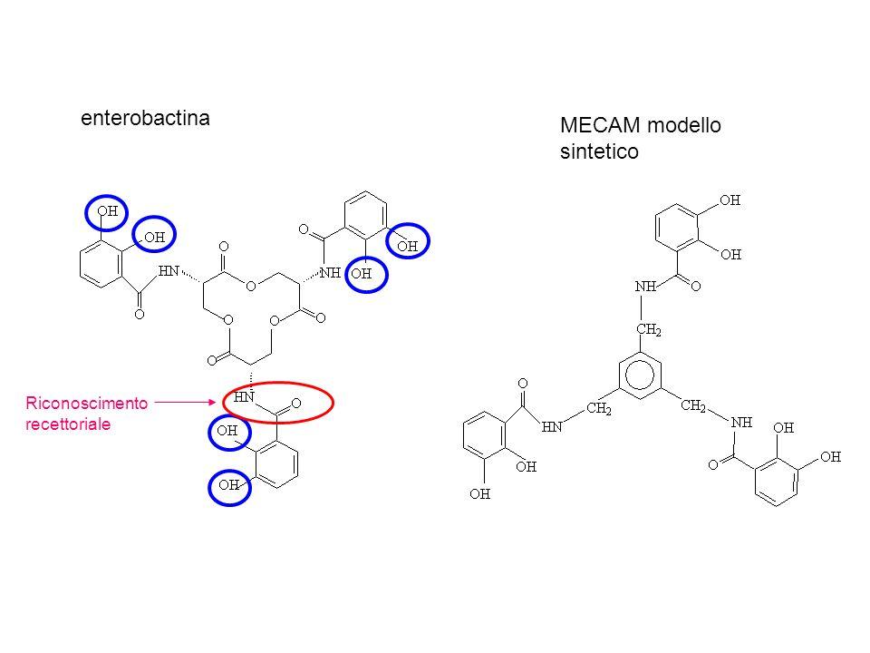 MECAM modello sintetico