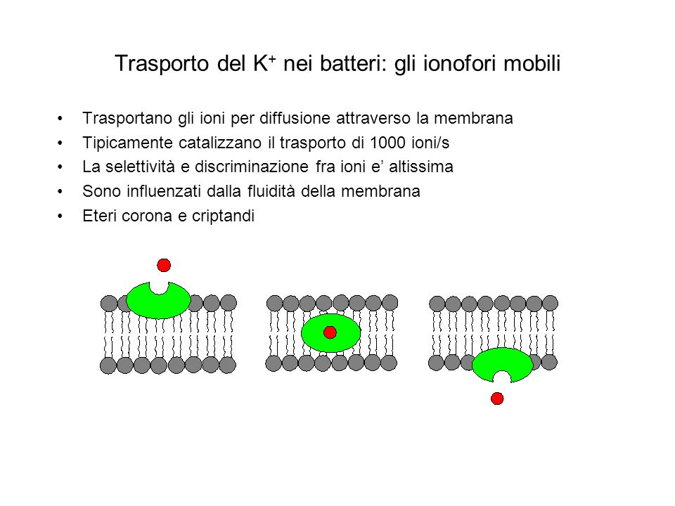 Trasporto del K+ nei batteri: gli ionofori mobili