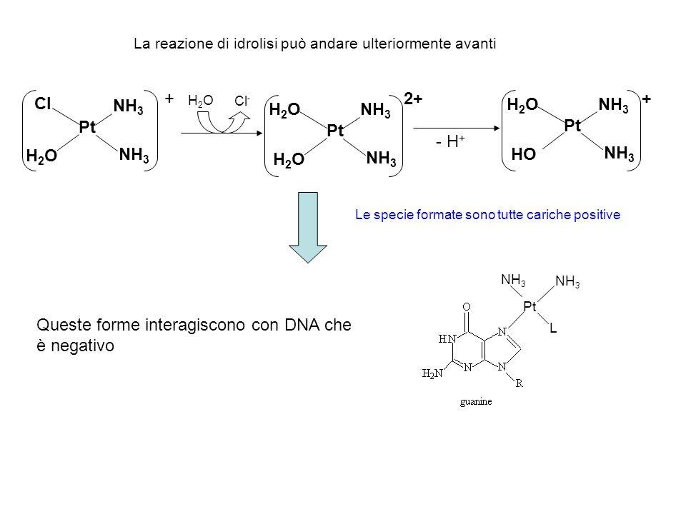 Queste forme interagiscono con DNA che è negativo