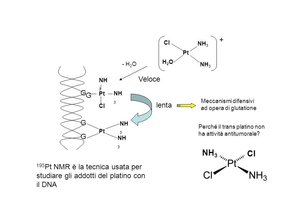 Pt Cl. NH3. H2O. + Veloce. G. Pt. NH3. Cl. lenta. - H2O. Meccanismi difensivi ad opera di glutatione.