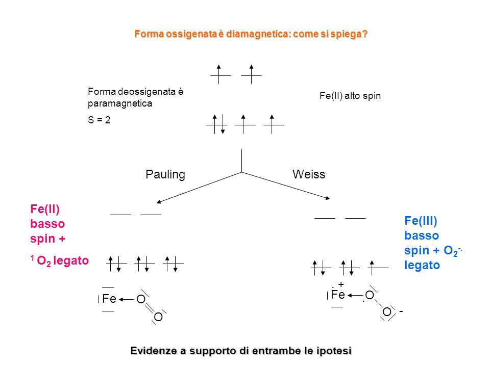 Fe(III) basso spin + O2-. legato
