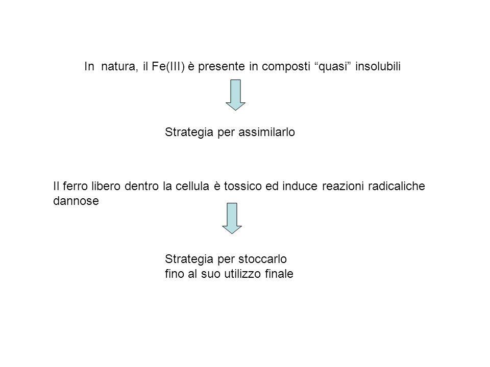 In natura, il Fe(III) è presente in composti quasi insolubili