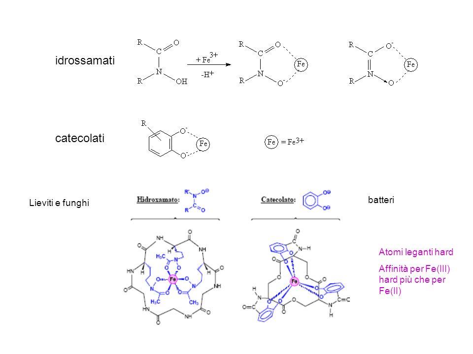 idrossamati catecolati batteri Lieviti e funghi Atomi leganti hard