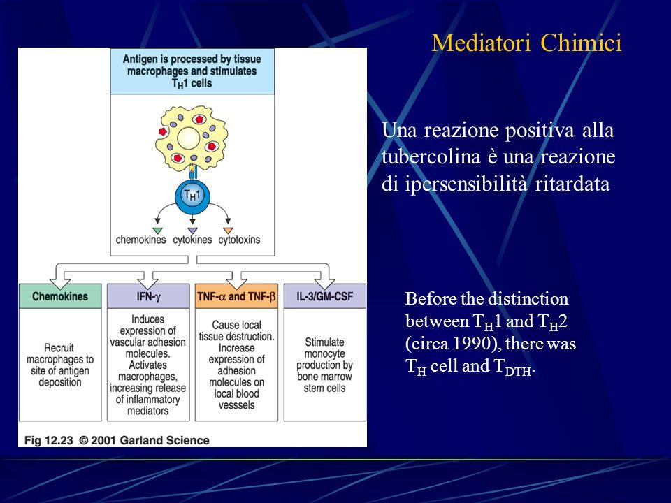 Mediatori Chimici Una reazione positiva alla tubercolina è una reazione di ipersensibilità ritardata.