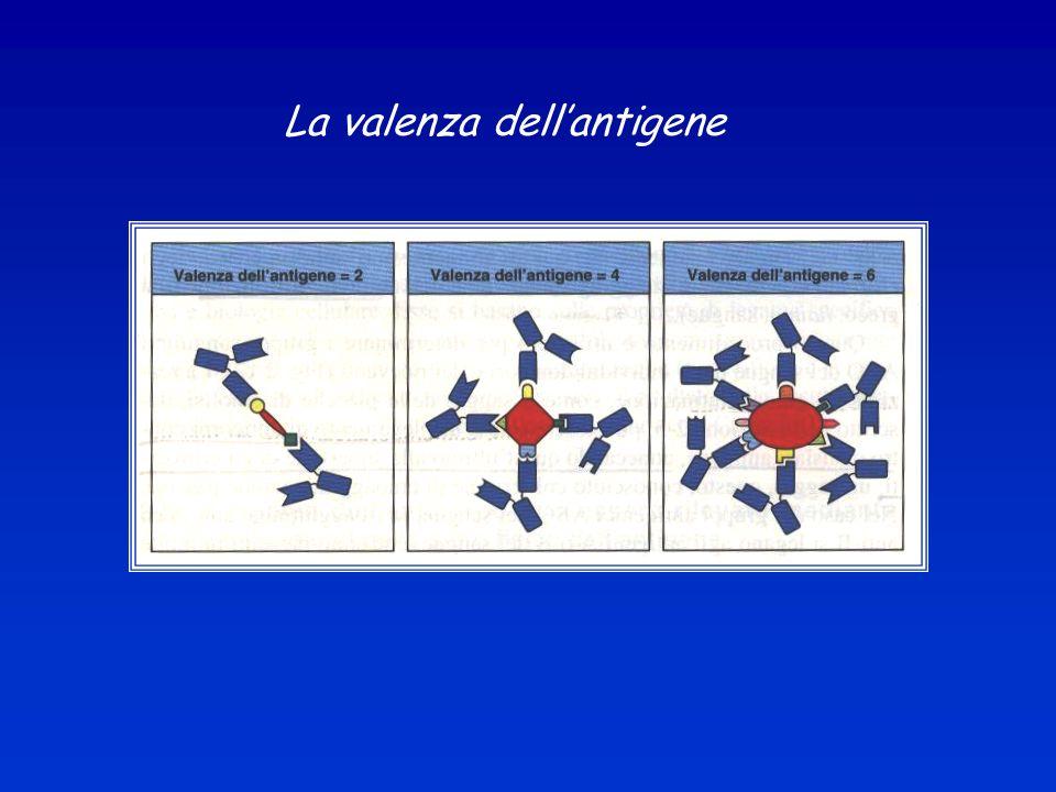 La valenza dell'antigene