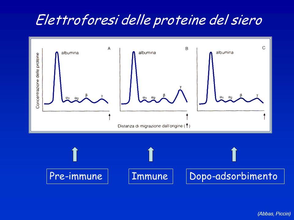 Elettroforesi delle proteine del siero