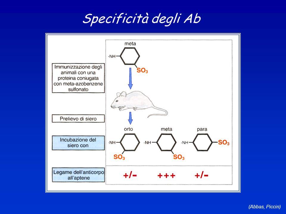Specificità degli Ab (Abbas, Piccin)