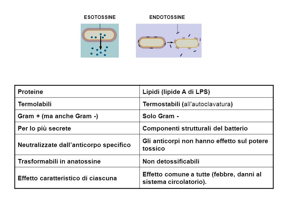 Lipidi (lipide A di LPS) Termolabili Termostabili (all autoclavatura)