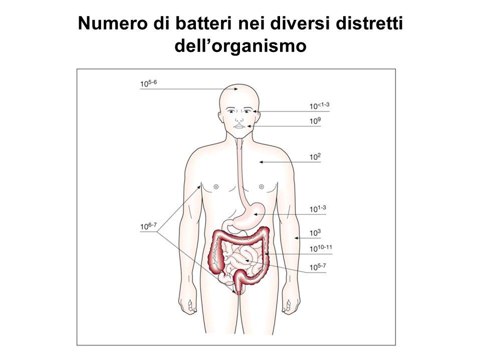 Numero di batteri nei diversi distretti dell'organismo