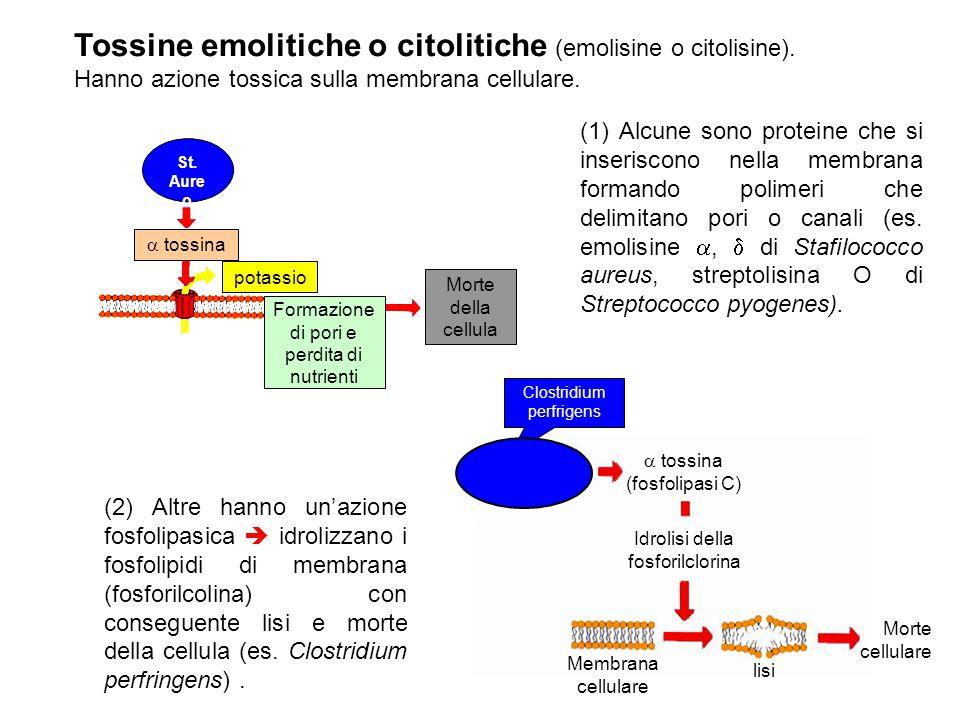 Tossine emolitiche o citolitiche (emolisine o citolisine).