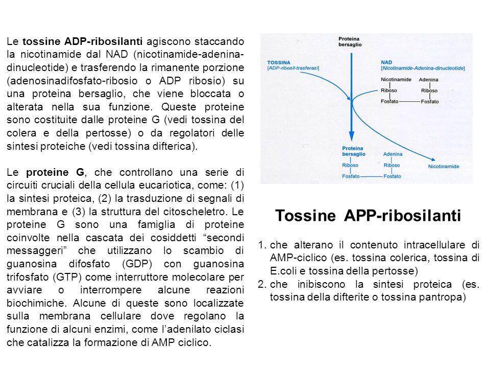 Tossine APP-ribosilanti